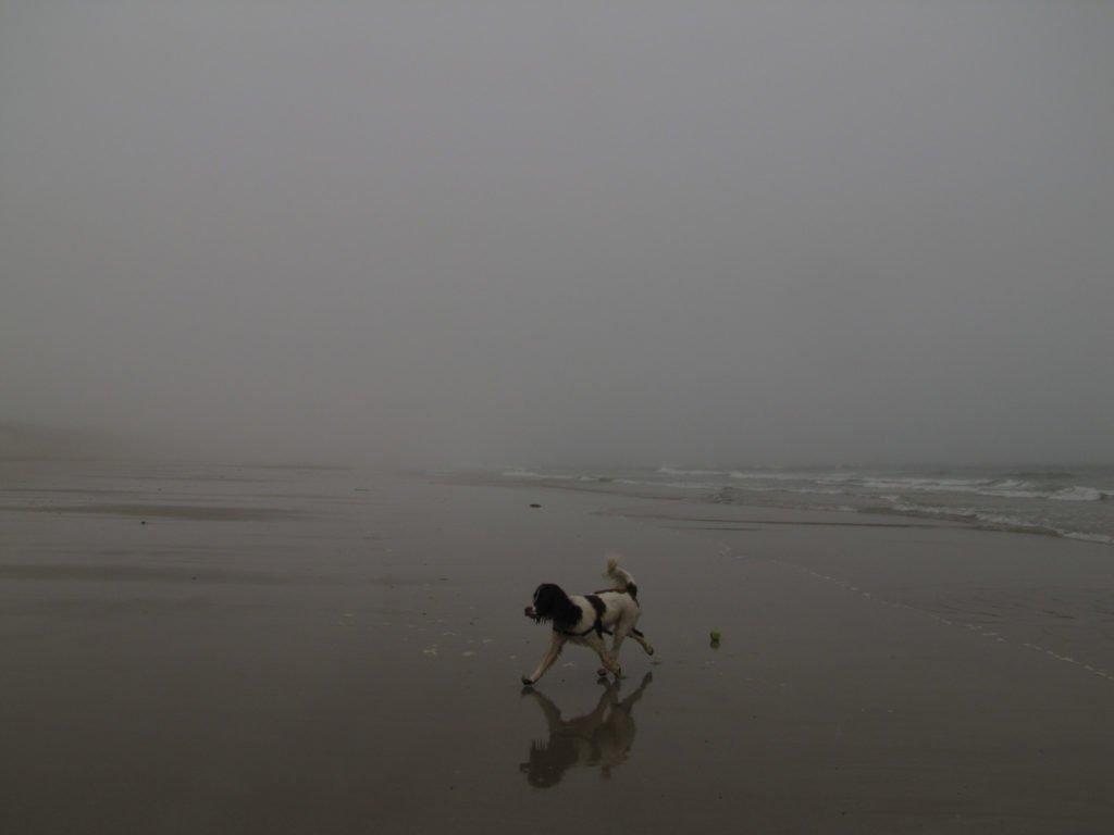 dog on a misty beach in Caithness Scotland, off the North Coast 500 NC500
